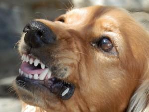 Hundetrainer kann mit aggressivem Hund umgehen