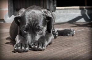 schwarzer Hundewelpe auf Terrasse