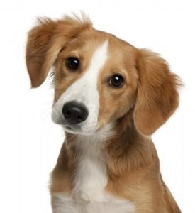 Hundetraining Mischling