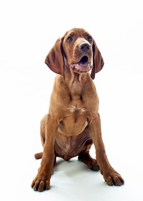 Hundetrainer Viszla