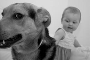 ängstlicher Hund mit Kind