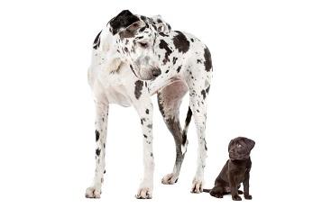 Hundepsychologe München